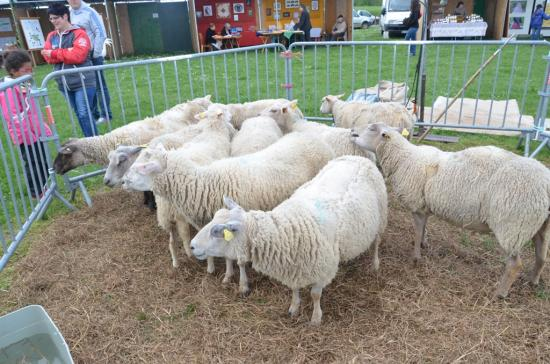 Pentrcôte 2016 moutons