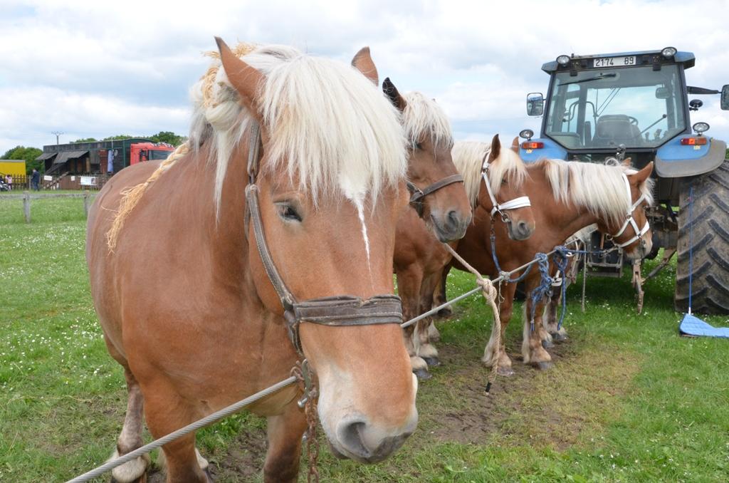 Pentecôte 2016 chevaux