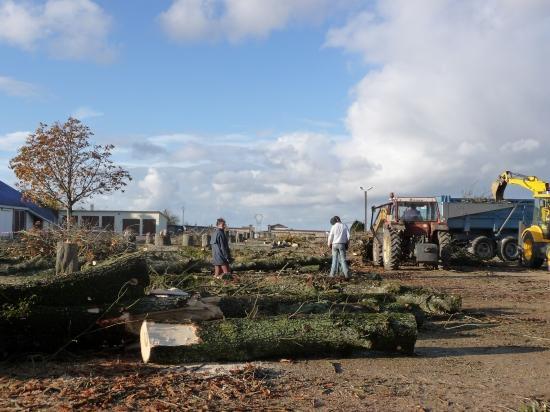 La découpe des arbres