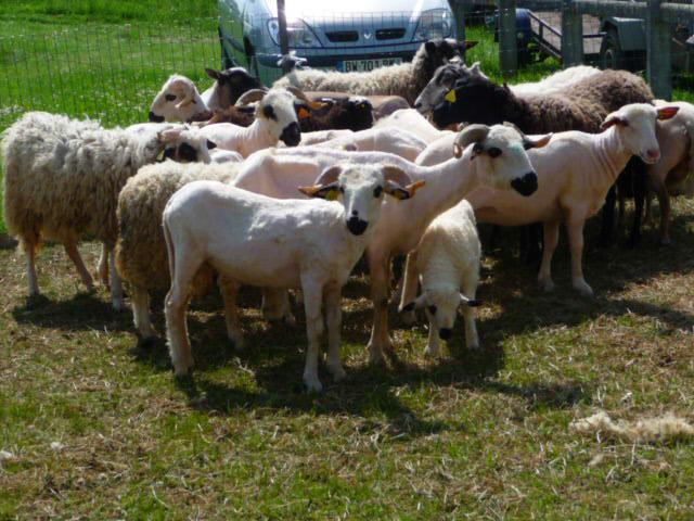 exposition d'animaux de ferme