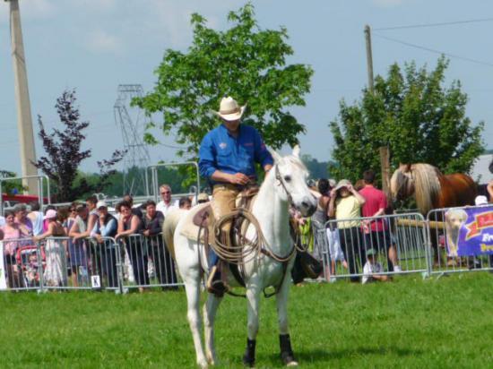 Démonstration de chevaux