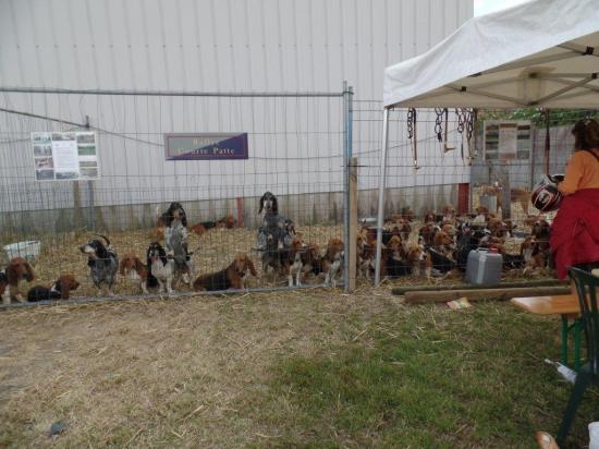 Rencontres animalières 2015